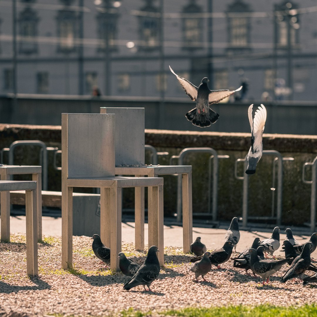 Pigeon around the chairs of the spirit of Mozart artwork