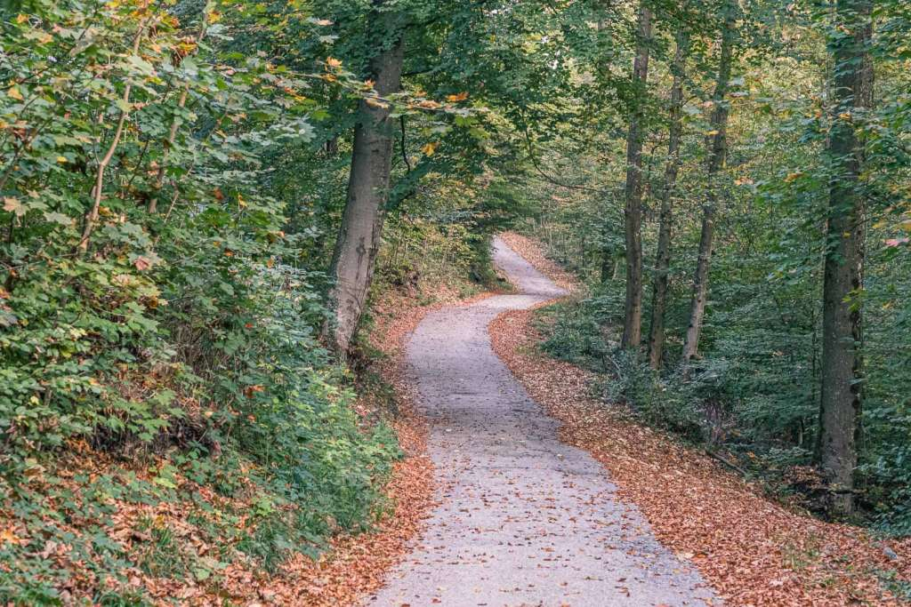 Hiking Path on Capuchin Mountain in Autumn
